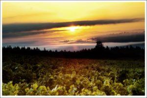Winderlea Wines From Oregon, USA - Katy Moore Sommelier - Toronto